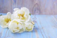 Flor da rosa do branco na tabela de madeira Imagem de Stock
