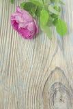 Flor da rosa do rosa na tabela de madeira Fotografia de Stock Royalty Free