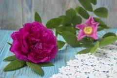 Flor da rosa do rosa na tabela de madeira, fundo rústico Foto de Stock