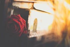 Flor da rosa do vermelho na caixa postal no dia de Valentim imagem de stock royalty free