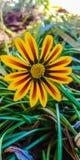 Flor da rua Fotografia de Stock Royalty Free