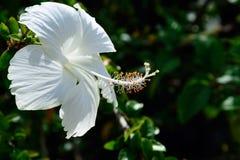 Flor da sapata imagens de stock