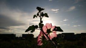 Flor da silhueta Foto de Stock Royalty Free
