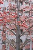 Flor da sumaúma no campus universitário de Xiamen, China foto de stock