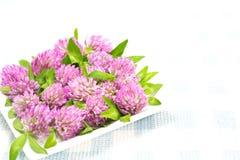 Flor da tecla do celibatário imagem de stock royalty free