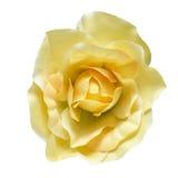 Flor da tela Fotografia de Stock Royalty Free