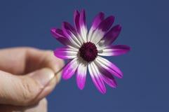 Flor da terra arrendada da pessoa imagem de stock royalty free