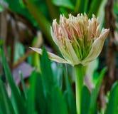 Flor da textura com fundo verde foto de stock royalty free