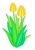 Flor da tulipa Foto de Stock Royalty Free