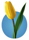 Flor da tulipa (malha) Imagem de Stock Royalty Free