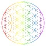 Flor da vida, ilustração do chakra do buddhism ilustração royalty free