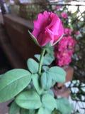 Flor da vista Fotos de Stock Royalty Free