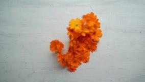 Flor dada forma de sopro do vento coração ausente filme