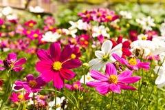 Flor das flores Imagens de Stock Royalty Free