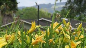 Flor das flores Foto de Stock Royalty Free