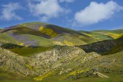 Flor das flores selvagens na escala do tremor Fotos de Stock Royalty Free