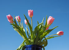 Flor das tulipas Imagens de Stock