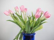 Flor das tulipas Imagens de Stock Royalty Free