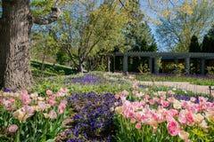 Flor das tulipas em Denver Botanic Gardens imagens de stock