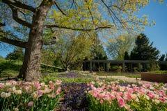 Flor das tulipas em Denver Botanic Gardens imagens de stock royalty free
