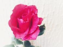 Flor de Ásia imagem de stock