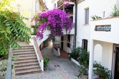 Flor de Acciaroli Imagen de archivo libre de regalías