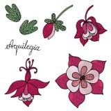 Flor de Aquilegia con el brote y la hoja aislados ilustración del vector