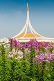 Flor de aranha cor-de-rosa e branca Fotos de Stock