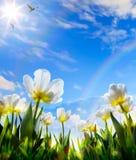 Flor de Art Spring Fotos de archivo