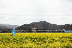 Flor de Awaji Foto de Stock