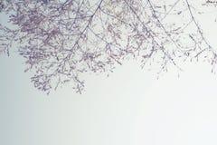 Flor de bambu da árvore no inverno Imagens de Stock