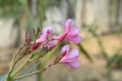 Flor de Beautyful que pendura na árvore em minha exploração agrícola imagens de stock royalty free