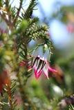 Flor de Bell fotografía de archivo libre de regalías