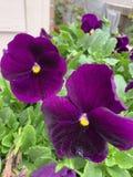 Flor de borboleta imagens de stock