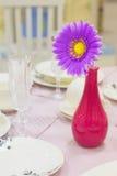 Flor de Brightl em um vaso imagens de stock royalty free
