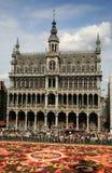 Flor de Bruxelas Fotografia de Stock