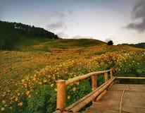 Flor de Buatong Imagens de Stock Royalty Free