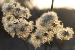 Flor de Bush Imagen de archivo libre de regalías