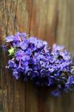 Flor de Bush de mariposa contra la madera resistida Imagen de archivo