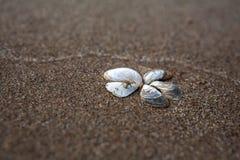 Flor de c?scaras en la arena Playa de la arena Lugar para la firma fotos de archivo libres de regalías