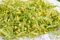Flor de cal para la infusión de hierbas Imagen de archivo libre de regalías