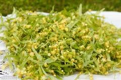 Flor de cal para la infusión de hierbas Imagen de archivo