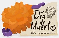 Flor de Cempasuchil com comemoração do rolo e da fita & x22; Dia de Muertos & x22; , Ilustração do vetor ilustração stock