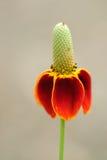 Flor de centro de Waterdrop Foto de archivo