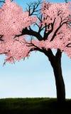 Flor de cereja ilustração do vetor