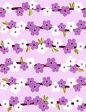 Flor de cereja. Fundo sem emenda. Imagens de Stock Royalty Free