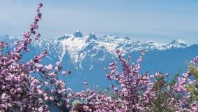 Flor de cerejeira com Mountain View Foto de Stock Royalty Free