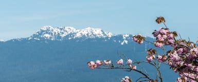 Flor de cerejeira com Mountain View Fotografia de Stock Royalty Free