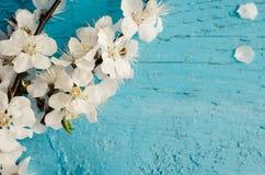 Flor de cerejeira da mola no fundo de madeira rústico Imagem de Stock