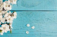 Flor de cerejeira da mola no fundo de madeira rústico Foto de Stock